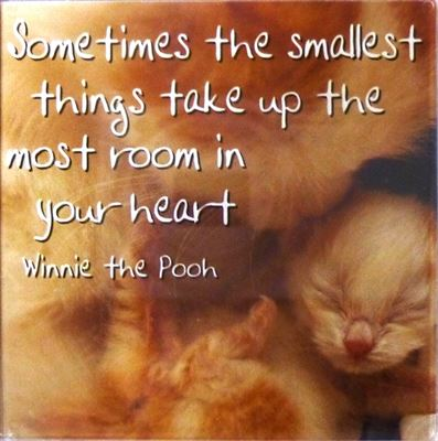 Sometimes the smallest things take up... Fridge Magnet 204