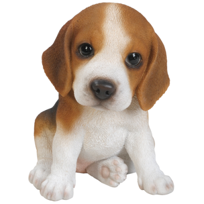 Beagle Puppy Pet in Gift Box