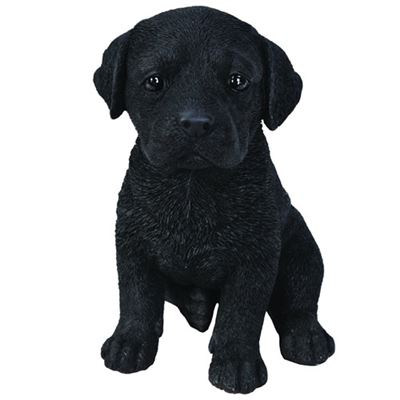 Black Labrador Puppy Pet in Gift Box