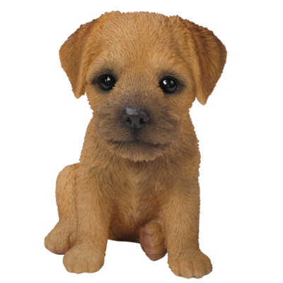 Border Terrier Puppy Pet in Gift Box