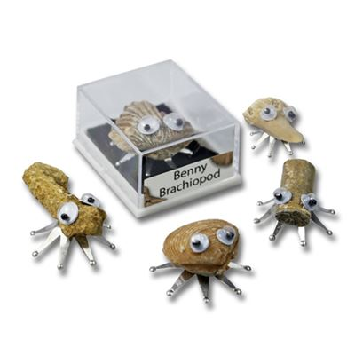 Fossil Bugs in Display Gift Cases 5 Pack